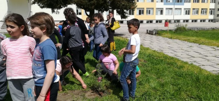 През Седмицата на гората: Ботевци засадиха кипариси и кедър