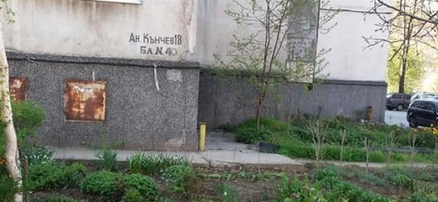 """Читателска връзка: Градинката на ул. """"Ангел Кънчев"""" 18 се превръща в райско кътче"""