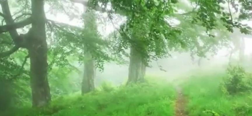 Традиции: В миналото в нощта срещу Спасовден бездетните нощували на поляни с росен