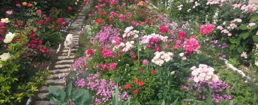 Райска градина на края на града, кой се грижи за нея?