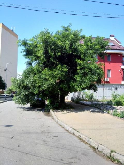 28дърво