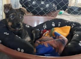 Направиха приют за бездомни животни в Мало Конаре