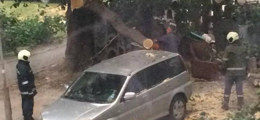 Пазарджик: Огромен клон захлупи кола в кв. Устрем