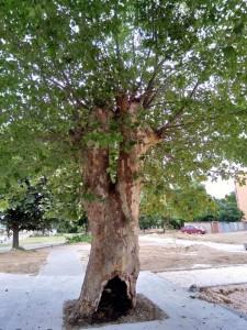 24дърво1