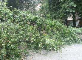"""Читателска връзка: Две вишни бутна дъждът на ул. """"Черноризец Храбър"""" в Пазарджик"""