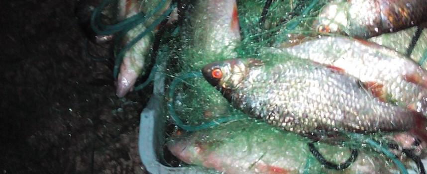 ИАРА спипа нарушител в язовир Доспат с 23 кг червеноперки в мрежата