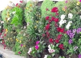 18 градини и балкони се състезават в конкурса за дворна красота