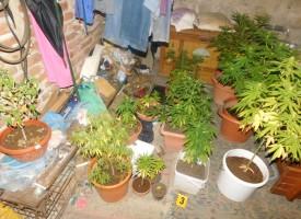 Полицията разкри наркооранжерия в Козарско