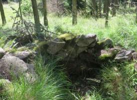 Собственици на горски имоти могат да ги продадат на държавата