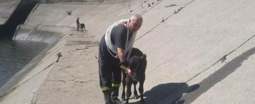 Пожарникари спасиха стадо животни край Момина Клисура