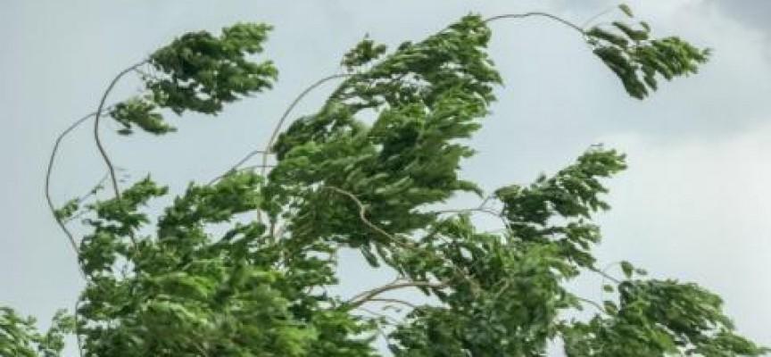 Силен вятър прогнозират днес за Пазарджик, приберете саксиите от балкона