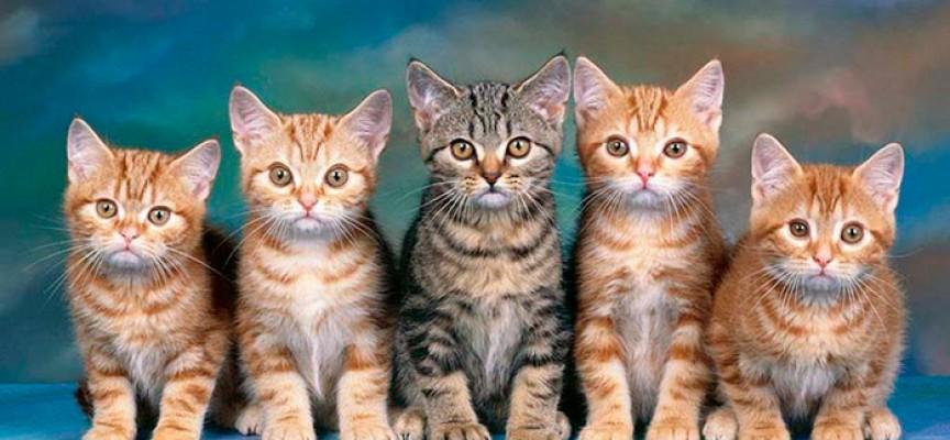 Образуваха бързо производство на селянин гръмнал съседската котка