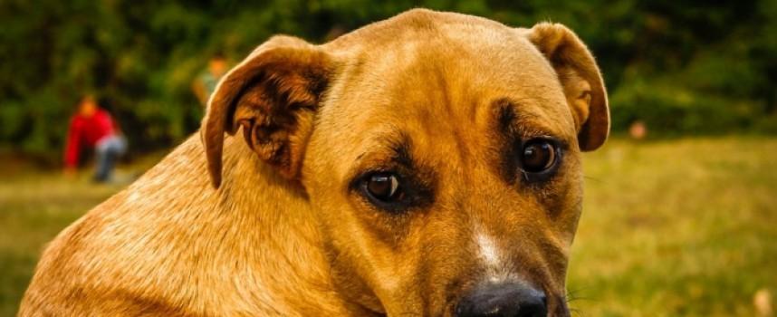 Хитрото куче Принсес се прави на бездомно нощем, ето защо