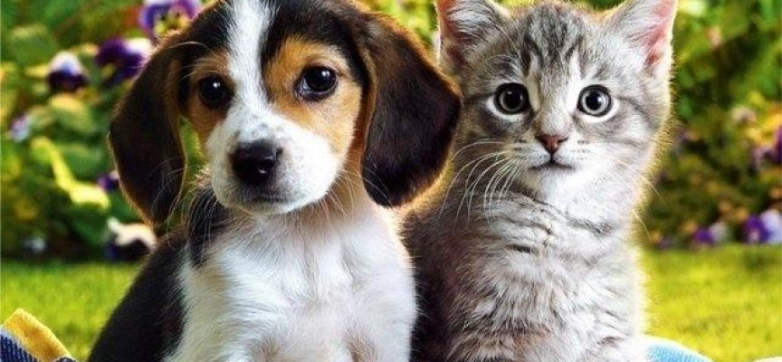 Базар за бездомни животни тече днес в Пазарджик