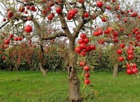 """Без тримата братя: Само за """"златната"""" ябълка"""