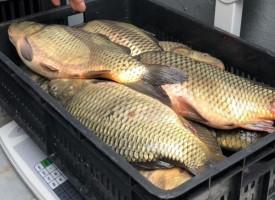 Ето какво трябва да гледате, когато купувате риба