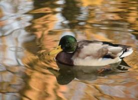 30 вида водолюбиви птици зимуват в областта
