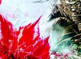 Пещера: Милка Павлова открива самостоятелна изложба в родния си град
