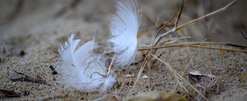 Птичите перца може и да ви предупреждават за нещо, знаете ли какво?