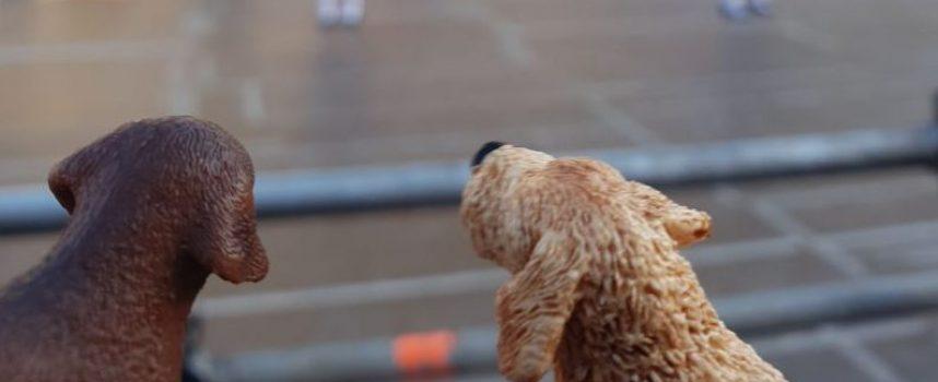 В Международния ден на кучето: Само 21 са регистрираните домашни любимци в Пазарджик