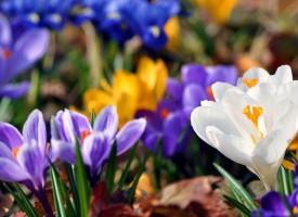 През тази седмица: Четвъртък и петък ще са най-топлите дни от март
