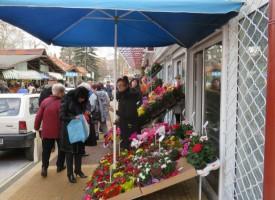 Пазарджик: Цветарите заеха сектора си на пазара, вижте разликата от времето преди месец