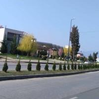 600 туи вече са насадени по пътя от Пазарджик към Звъничево