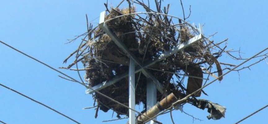 През 2018 г.: Електроразпределение Юг монтира 166 нови платформи за щъркелови гнезда