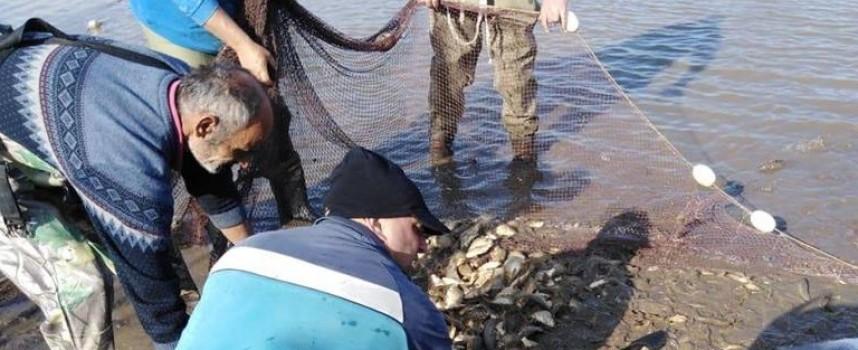 """300 кг. шаранчета и 500 кг. амурчета вече плуват във водоемите на СДЛР """"Сокол"""", издирват изгубено куче"""