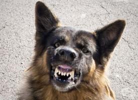 Агресивни кучета нападнаха жена в Дебращица, вкараха я в болница с инфаркт