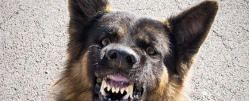 Ром с ауди влачи куче в центъра, спипаха го