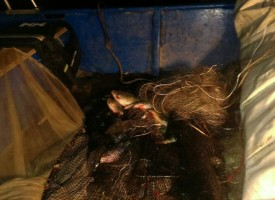 Задържаха бракониер от Ракитово с лодка и незаконна риба