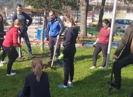 """Сърница: Общинари и горски насадиха 800 фиданки от """"Червен дъб"""""""
