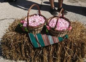 В последния ден на май: Областният управител почете празника на розата в Бяга