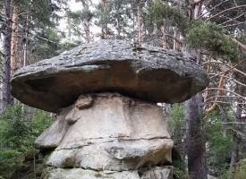 Обичате да търсите гъби? Знаете ли къде има каменни?