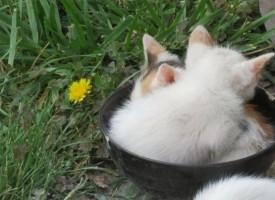 Прана котка оцеля в пералнята