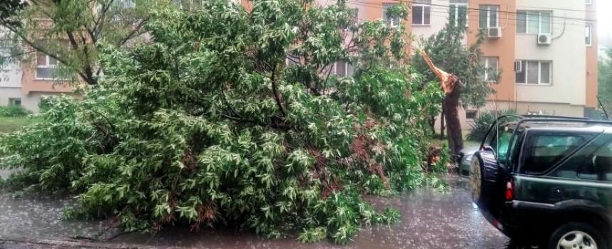 """Бурята бутна дърво и затапи ул. """"Петър Бонев"""" в Пазарджик"""
