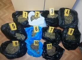 Откриха и нива с марихуана в Капитан Димитриево