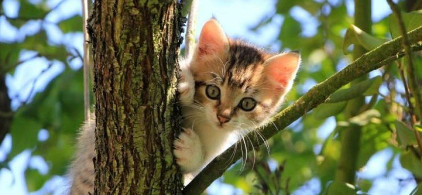 Кратка история на домашните любимци: Балсамирани котки? Да, в Бритиш мюзеум