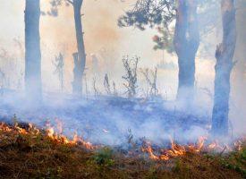 Вятърът разпалва пожара край Ветрен