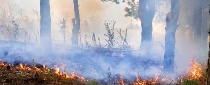 139 декара гора изгоря вчера край Смилец