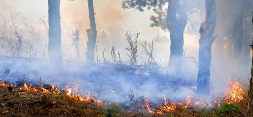 Областният управител издаде заповед за определяне на пожароопасния сезон