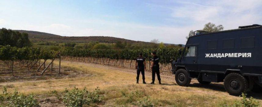 Полиция и жандармерия брани лозовите масиви в община Септември