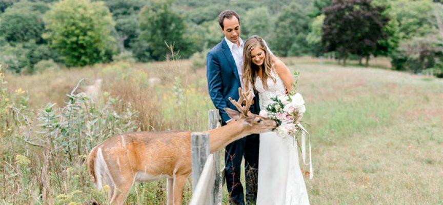 Елен позира за сватбени снимки, привлечен от аромата на букета на булката