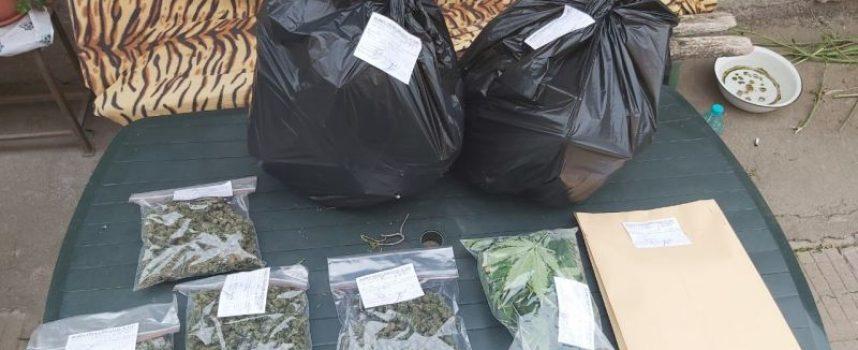 Откриха марихуана в Ивайло, Щърково, Велинград и Пещера