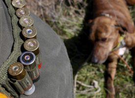 В Стара планина: Мечка нападна ловец докато дебнел на пусия