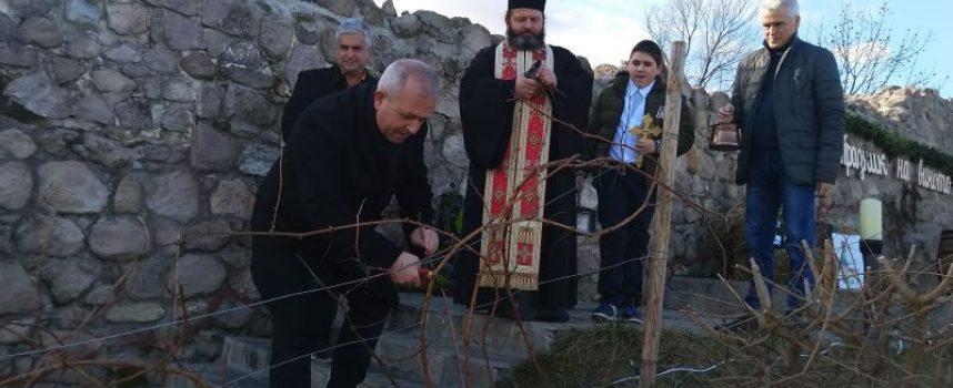 Коронясаха Цар на виното в Пещера, кметът заряза ритуално лоза на Перистера