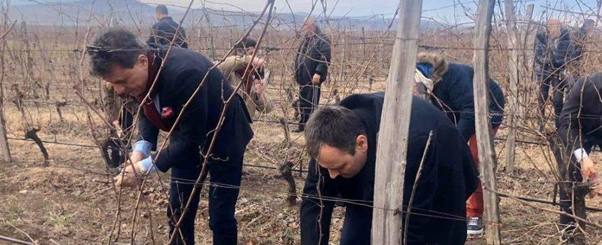 """Тодор Попов и зам.-областният Йордан Кожухаров зарязаха лозята в """"Беса Валей"""""""