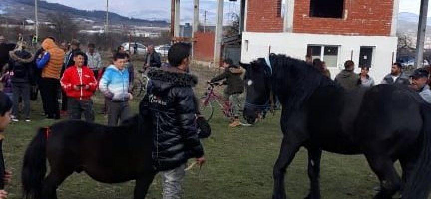 Днес: Кушии се проведоха и в Ракитово, ето кои са победителите