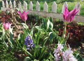 УТРЕ: Настъпва пролетното равноденствие